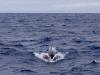 Unbekannter Wal