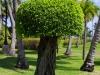 Baum mit Baum oben drauf