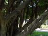 Baum mit Baum mit Baum oben drauf