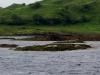 Faule pelzige Seerobben sonnen sich bei Ebbe