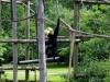 Fröhliche Tierwelt im Fota Wildlive Park